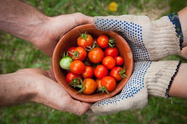 17++ U pick tomatoes near me information
