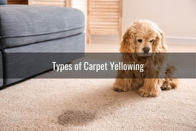 Types of Carpet Yellowing