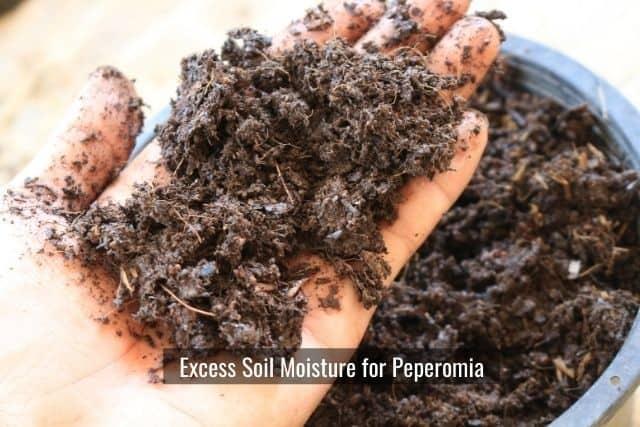 Excess Soil Moisture