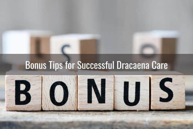 Bonus Tips for Successful Dracaena Care